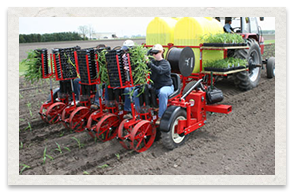 Mechanical Transplanter Model 5000 on Field