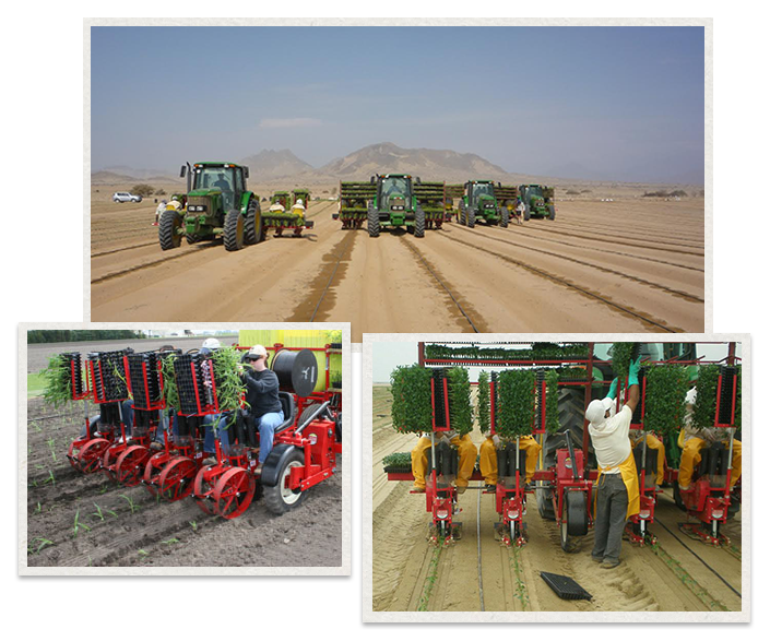 three separate images of the Mechanical Transplanter transplanting plants