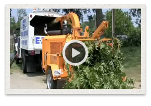 video of the Carlton Model 2012 Disk Chipper being used