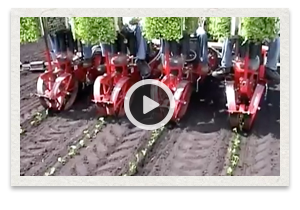 video of the Mechanical Transplanter Model 5000WD